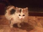 Увидеть фото  Трое котят ищут добрых хозяев, В добрые руки, 49928688 в Москве