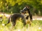 Новое фотографию  Собака Нора, в дар, в добрые руки, 49959965 в Москве