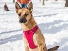 Просмотреть фото  Чудесная собака Чили в добрые руки, 62699705 в Москве