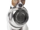Смотреть изображение  Интернет магазин товаров для животных Зайцы, Онлайн г, Омск 66523745 в Омске