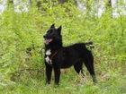 Смотреть фотографию  Маленькая собака Нора в добрые руки, 66595026 в Москве