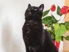 Новое изображение  Чёрная кошка в добрые руки, 66605401 в Москве