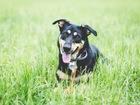 Просмотреть фото  Добрая собака Жуня в добрые руки, 66608888 в Москве