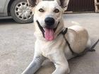Новое фотографию  Отдам собаку в добрые руки 68117598 в Краснодаре