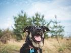Скачать фотографию  Чудесная собака Лада в добрые руки, 68272153 в Москве