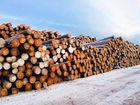 Новое фото  Бревно лиственницы и кедра от производителя 68392304 в Москве