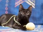 Просмотреть фото  Ищет дом котёнок Нуар с повадками настоящей пантеры! 68433075 в Москве