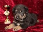 Свежее фотографию  Четверо щенков в добрые руки, 68563760 в Москве