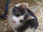 Смотреть фотографию  Славный котенок Пончик ищет дом, 68592340 в Москве