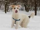 Скачать фотографию  Ищет дом очаровательный щенок, 69103766 в Москве