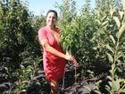 Свежее фотографию  Саженцы Многосортового дерева 71125752 в Краснодаре
