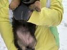 Свежее foto  Смешные щенята в добрые руки 81174982 в Москве