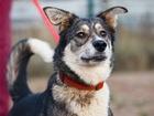 Скачать бесплатно foto  Чудесная собачка Мышка ищет семью, 84331866 в Москве