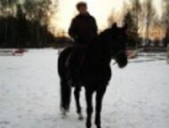 "Занятия в конно-спортивной школе Шамиран Конно-спортивная школа ""Шамиран"" пригла"