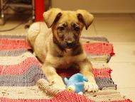 Славный щенок Арья в добрые руки Ищет дом и любящих родителей славная малышка Ар