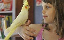 Приютим вашу птичку и окружим заботой и любовью