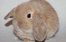 Мини крольчата, цветные и вислоухие продажа