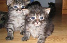 Продаются очаровательные котята