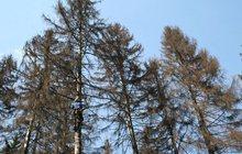 Удаление деревьев в Москве Сити-М