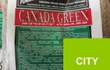 канадская газонная трава канада грин