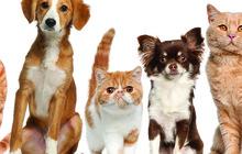 Ветеринар к Вам на дом по Москве и области