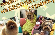 Профессия Грумер, Обучение - груминг собак и кошек, Стрижка, Триминг