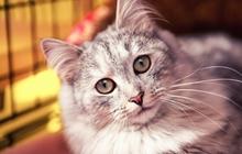 Котик Тема ищет теплые и любящие руки