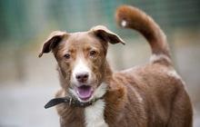 Собака-какао с розовым носом ищет семью