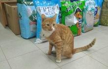 Любителям рыжих котиков, В дар
