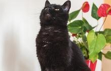 Чёрная кошка в добрые руки