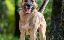 Молодой пес Туман ищет дом