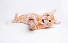 Рыжий котенок Гипноз ищет дом