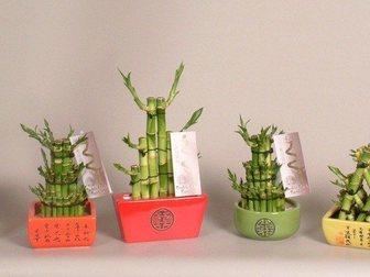 Скачать изображение Другие предметы интерьера Лакки Бамбук в керамике 32337057 в Москве