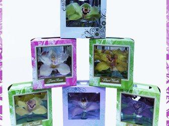 Смотреть изображение Растения Орхидея в подарок на 8 марта 32408203 в Москве