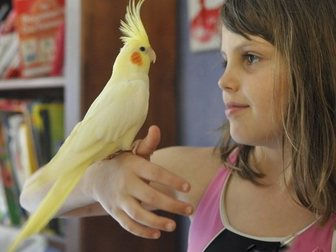 Уникальное изображение Птички Приютим вашу птичку и окружим заботой и любовью Приму в дар средних и крупных попугаев , 33040383 в Москве