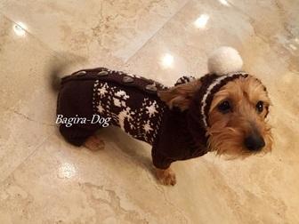 Новое фото Одежда для собак Вязаная одежда для такс 33320982 в Москве