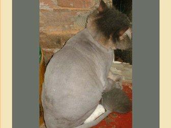 Скачать бесплатно фото Услуги для животных стрижка собак и кошек, 34271702 в Москве