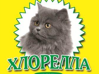 Свежее фотографию Корм для животных Порошок Хлореллы 34582715 в Москве