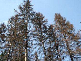 Свежее изображение Разные услуги Удаление деревьев в Москве Сити-М 34602693 в Москве
