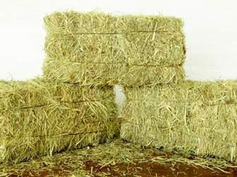 Скачать бесплатно изображение  Продается сено от производителя 36754463 в Москве