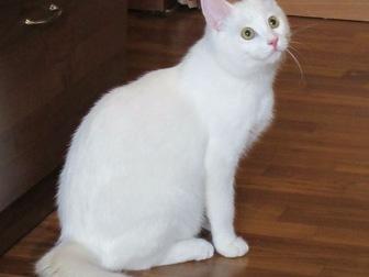 Просмотреть фото  Обаятельный котик Тотошка ищет любящих маму и папу, 43913572 в Москве