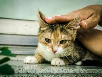 Свежее foto  Молодая кошечка Дольче ищет дом! 43992490 в Москве