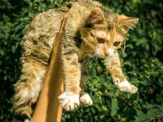 Свежее фото  Молодая кошечка Дольче ищет дом! 43992490 в Москве
