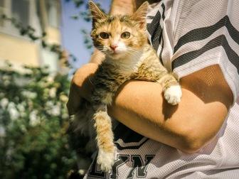 Увидеть фотографию  Молодая кошечка Дольче ищет дом! 43992490 в Москве