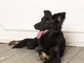 Смотреть foto  Молодая активная собака Честа в хорошие руки, 44181668 в Москве