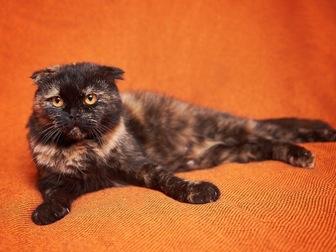 Новое фото  Вислоухая кошечка Соня в добрые руки! 44354510 в Москве