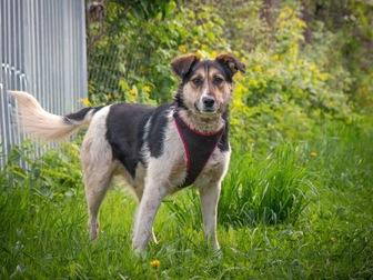Просмотреть фотографию  Добрый пес Рони в добрые руки, 44555989 в Москве