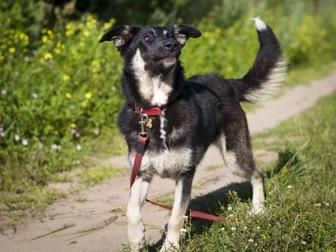 Новое фотографию  Чудесная собака Лада в добрые руки, 50193839 в Москве