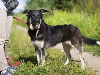 Смотреть фото  Чудесная собака Лада в добрые руки, 50193839 в Москве