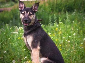 Смотреть изображение  Классный пес Ронни в добрые руки, 50196411 в Москве